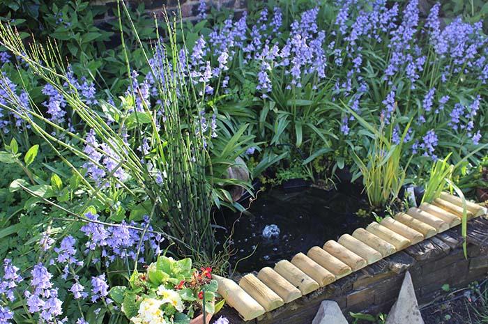 Bluebells around pond
