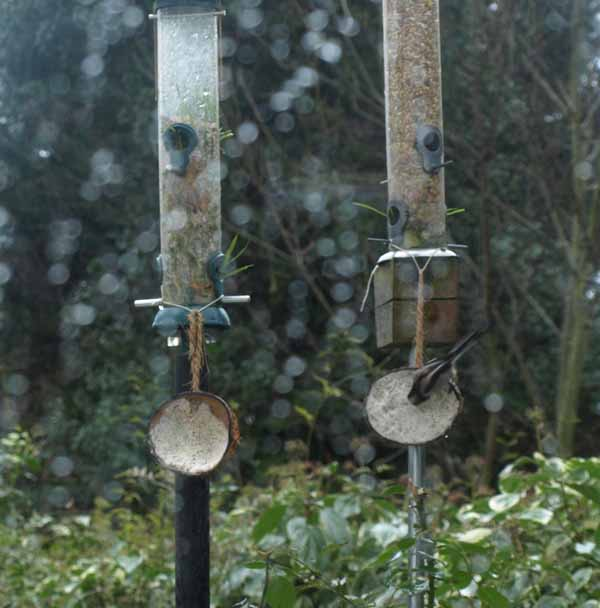 Bird feeders in rain