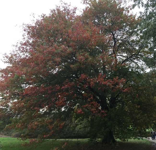 tree-hampstead-heath